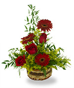 The Bold and Beautiful Arrangement